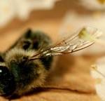 abeilles-abandonne-humanite