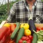 amap-legumes-fermes