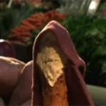 La revanche des légumes bio