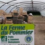 ferme-pommier-amap-bio-lille