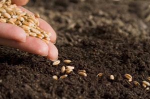 semences-bio