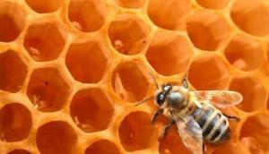 Bio-info-ruche-miel-abeilles_w692_h397_r4_q90